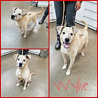 Adopt A Pet :: Wylie - Steger, IL