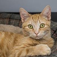 Adopt A Pet :: Jaynie - Binghamton, NY