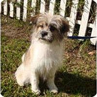 Adopt A Pet :: PIPER & TINY - Toluca Lake, CA