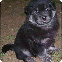 Adopt A Pet :: Zhang - Chandler, IN
