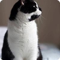 Adopt A Pet :: Georgie - Vancouver, BC