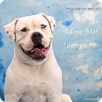 Adopt A Pet :: Samson - Acton, CA