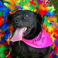 Terrier (Unknown Type, Medium) Mix Dog for adoption in Thibodaux, Louisiana - Nemo K92-8378