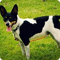 Adopt A Pet :: Buddy - Franklin, VA