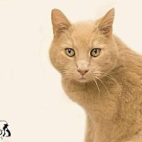 Adopt A Pet :: Donovan - Belton, MO