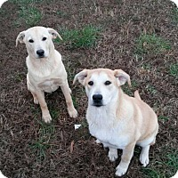 Adopt A Pet :: Tilley - Scotland Neck, NC