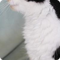 Adopt A Pet :: Iris - Jefferson, NC