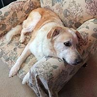 Adopt A Pet :: Rosalie - Brattleboro, VT