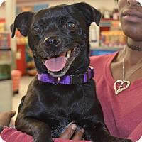 Adopt A Pet :: Josie - Lodi, CA