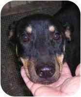 German Shepherd Dog Mix Dog for adoption in Carrollton, Texas - Johnny
