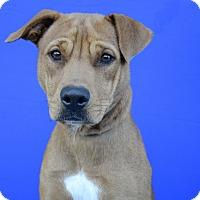 Adopt A Pet :: ACADIA - LAFAYETTE, LA