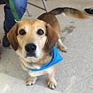 Adopt A Pet :: Sammy *Adoption Pending*