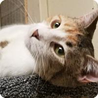 Adopt A Pet :: Libby - Roseville, MN