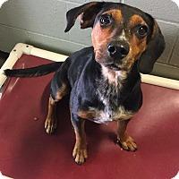 Adopt A Pet :: Warren - Morehead, KY