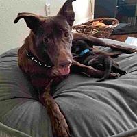 Adopt A Pet :: Nessie - Martinez, CA