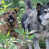 Adopt A Pet :: Boris - Kingston, TN