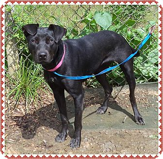 Labrador Retriever Mix Dog for adoption in Marietta, Georgia - LENORA