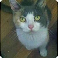 Adopt A Pet :: Rosie - Jenkintown, PA