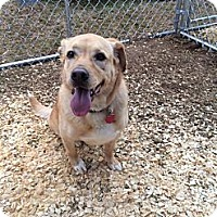 Adopt A Pet :: Blondie - Fort Valley, GA