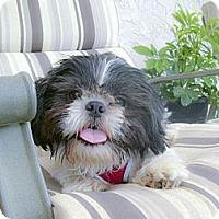 Adopt A Pet :: Alfie purebred, easy no hang u - Sacramento, CA