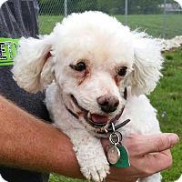 Adopt A Pet :: Sophie - Huntingburg, IN