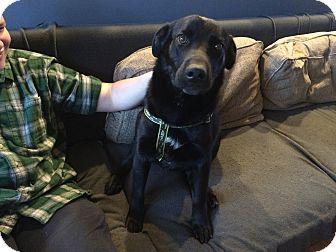 Labrador Retriever Mix Dog for adoption in Huntsville, Alabama - Dodger