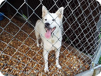 Husky Mix Dog for adoption in Watha, North Carolina - Tanya