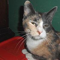 Adopt A Pet :: Isabella - Pensacola, FL