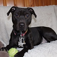 Adopt A Pet :: Richie - Long Beach, NY