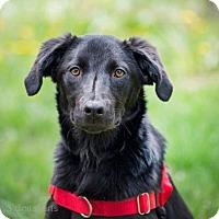 Adopt A Pet :: Daisy - Boulder, CO