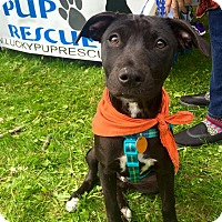 Adopt A Pet :: Kelly - in Maine - kennebunkport, ME