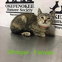 Adopt A Pet :: Whisper - Waycross, GA