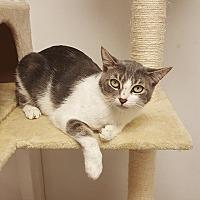 Adopt A Pet :: Alaska - Brandon, FL