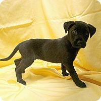 Adopt A Pet :: 17-d06-033 Brendan - Fayetteville, TN