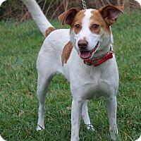 Adopt A Pet :: Glory - Waldorf, MD