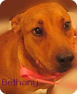 Labrador Retriever Mix Dog for adoption in Beaumont, Texas - Bethany