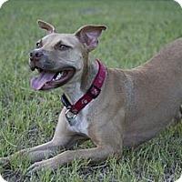 Adopt A Pet :: MAGGIE - Tallahassee, FL