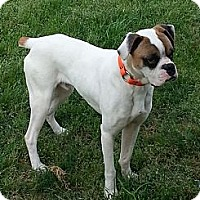Adopt A Pet :: RUFUS - North Haven, CT