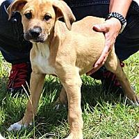 Adopt A Pet :: Bama - Silsbee, TX