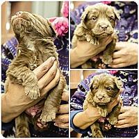 Adopt A Pet :: Dock Puppy - Cumming, GA