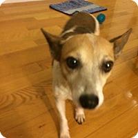 Adopt A Pet :: Terrific Torie - Madison, NJ