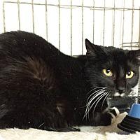 Adopt A Pet :: Sassy - New  York City, NY