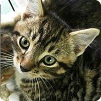 Adopt A Pet :: Alex - N. Billerica, MA