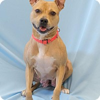 Adopt A Pet :: Dorothy - Alpharetta, GA