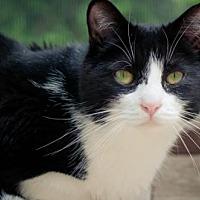 Adopt A Pet :: Joaquin - Santa Rosa, CA