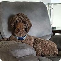 Adopt A Pet :: Willie - Toronto, ON