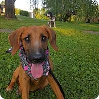 Adopt A Pet :: Loretta - Glastonbury, CT