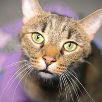 Adopt A Pet :: Smokey Robinson - New Freedom, PA