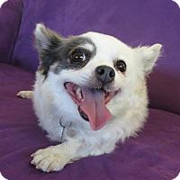 Adopt A Pet :: SABRINA - video! - Nampa, ID