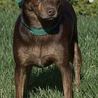 Adopt A Pet :: Ruby - Palo Alto, CA